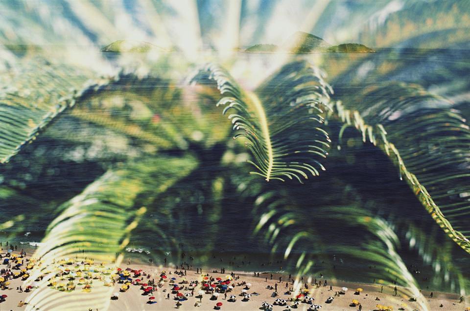 Ein Palmfarn.