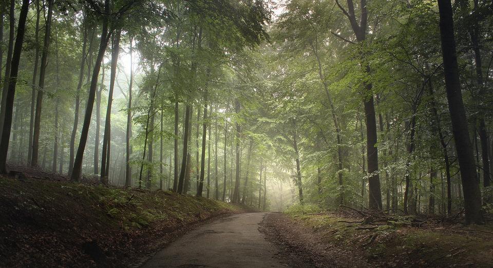 Landschaftsfotografie: Ein Weg führt durch die Mitte eines Waldes, in dem seitlich Licht einfäll.