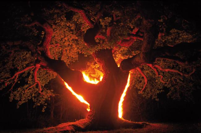 Ein Baum, der vom hinten beleuchtet wurde und rot strahlt.