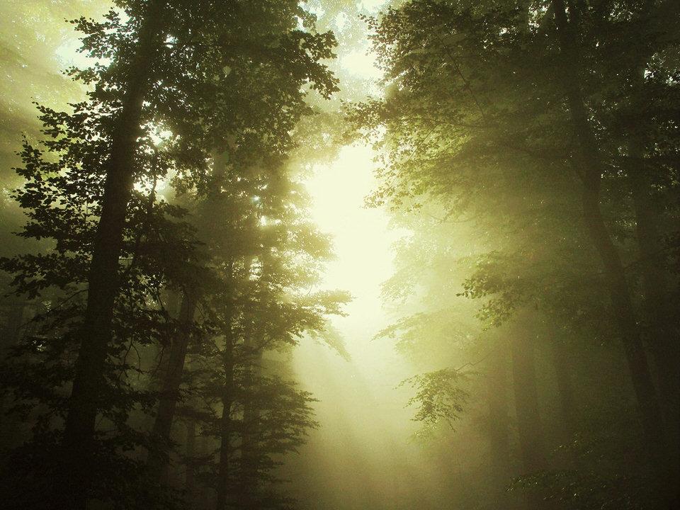 Lichtstrahlen durchfluten einen vernebelten Wald.