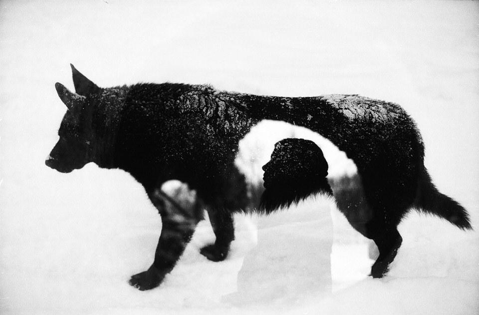 Doppelbelichtung, eine Person und ein Hund im Schnee sind zu sehen.