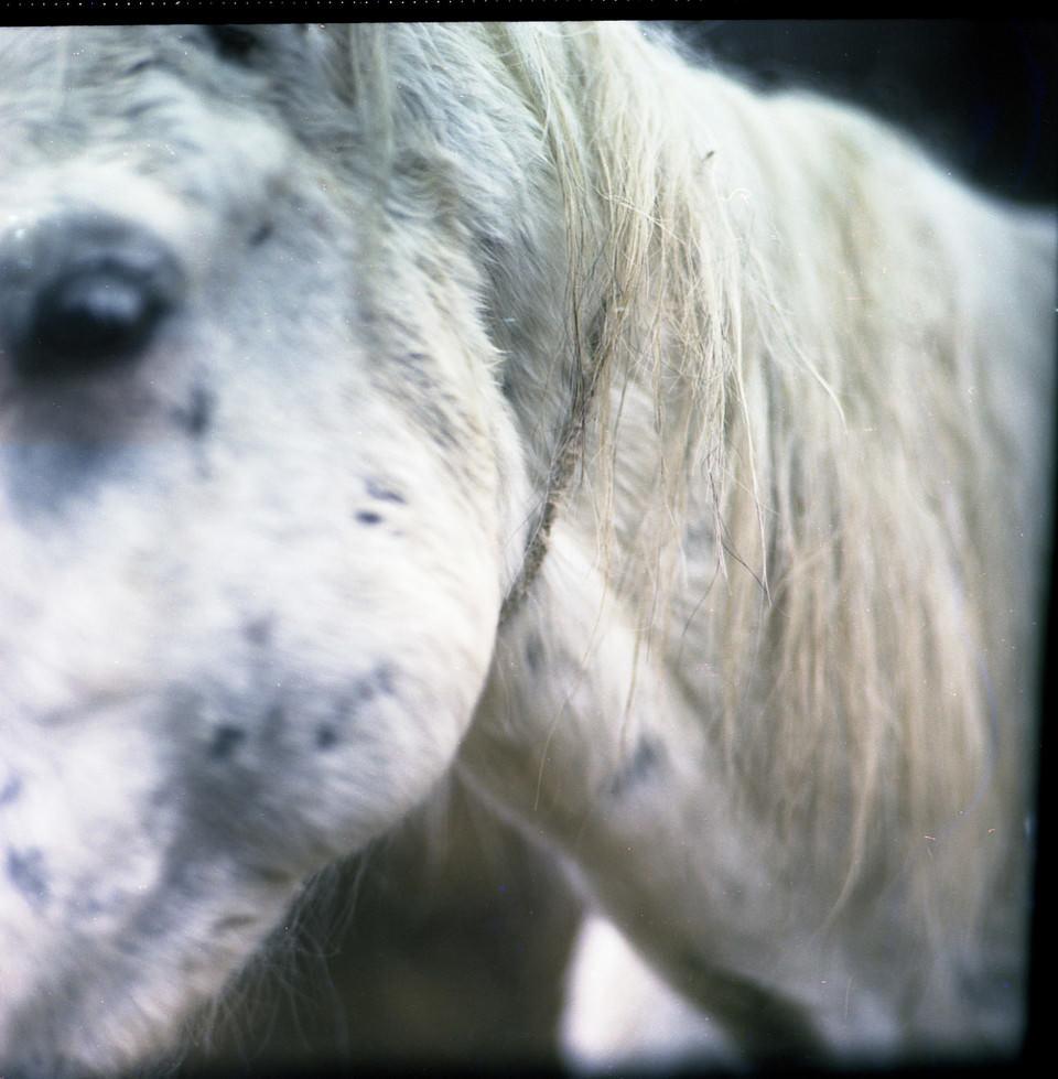 Ein weißes Pferd ganz nah