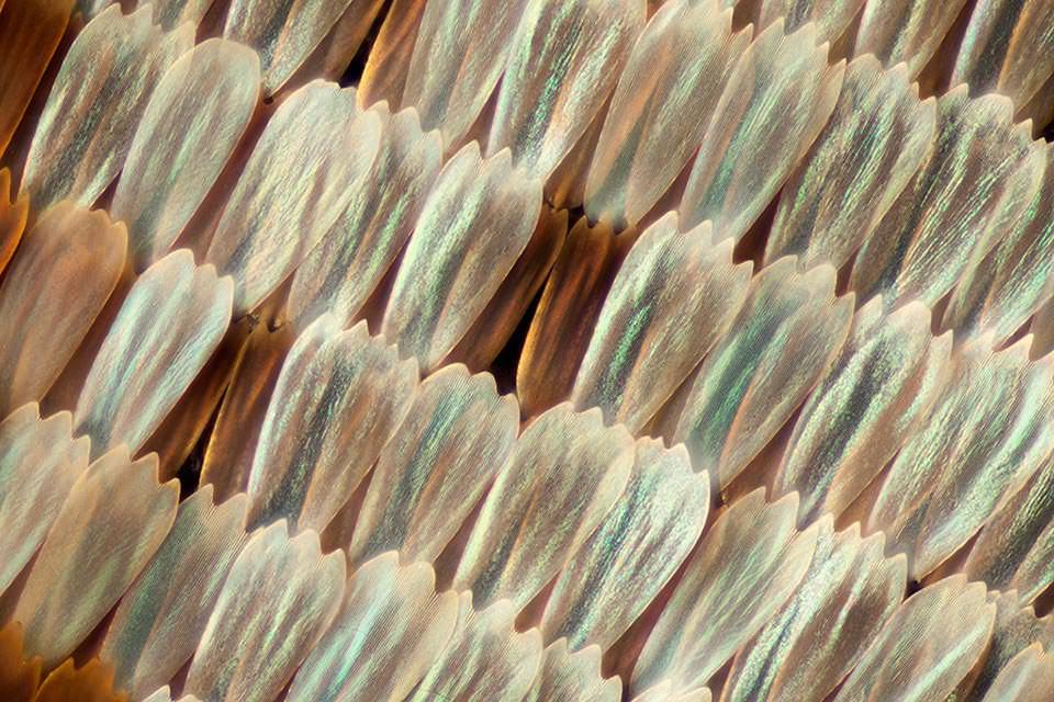 Ein Schmetterlingsflügel in Nahaufnahme