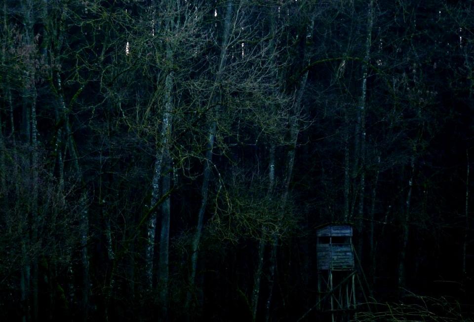 Ein sehr dunkler Waldrand mit Hochstand.