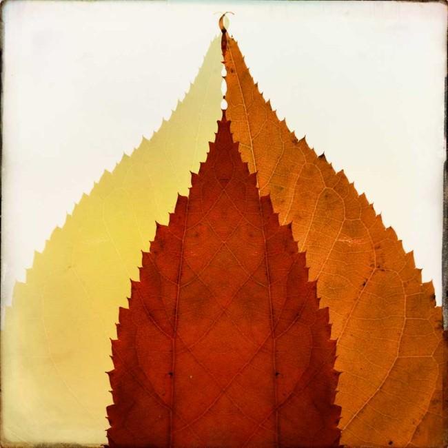 Verschiedenfarbige Blätter.