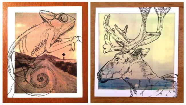 Wir sehen einen gezeichneten Gecko und einen Hirsch.