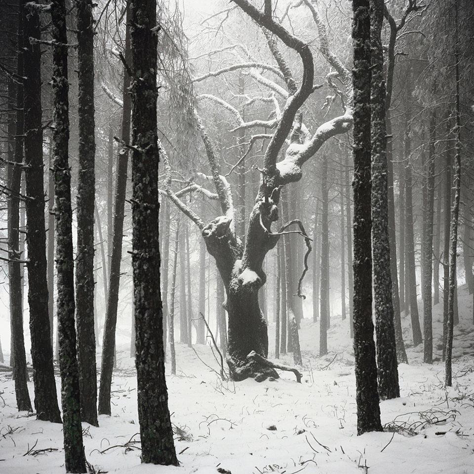 verschneiter Baum im Wald