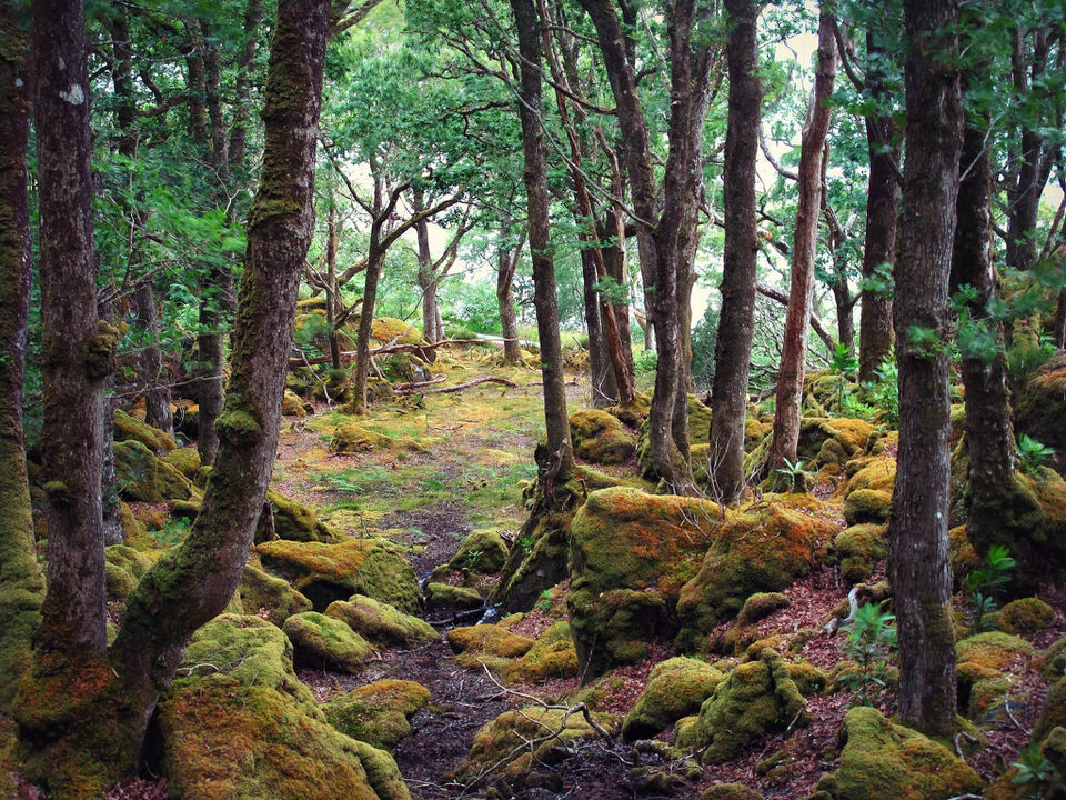Blick in einen moosigen Wald.