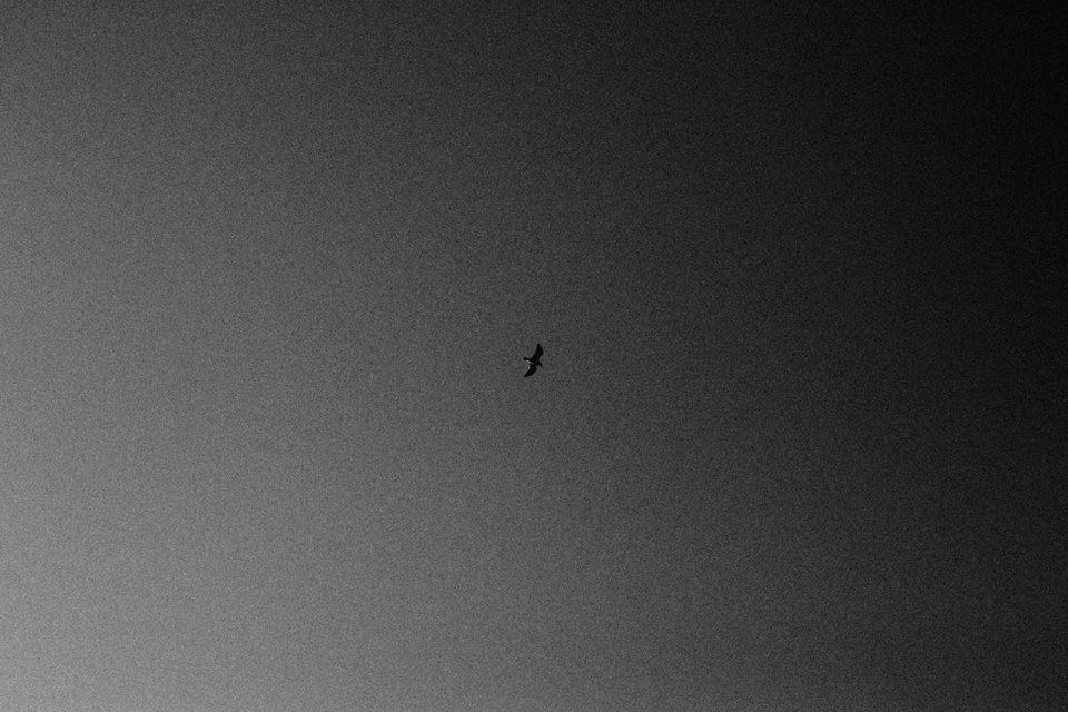 Ein Vogel am Himmel