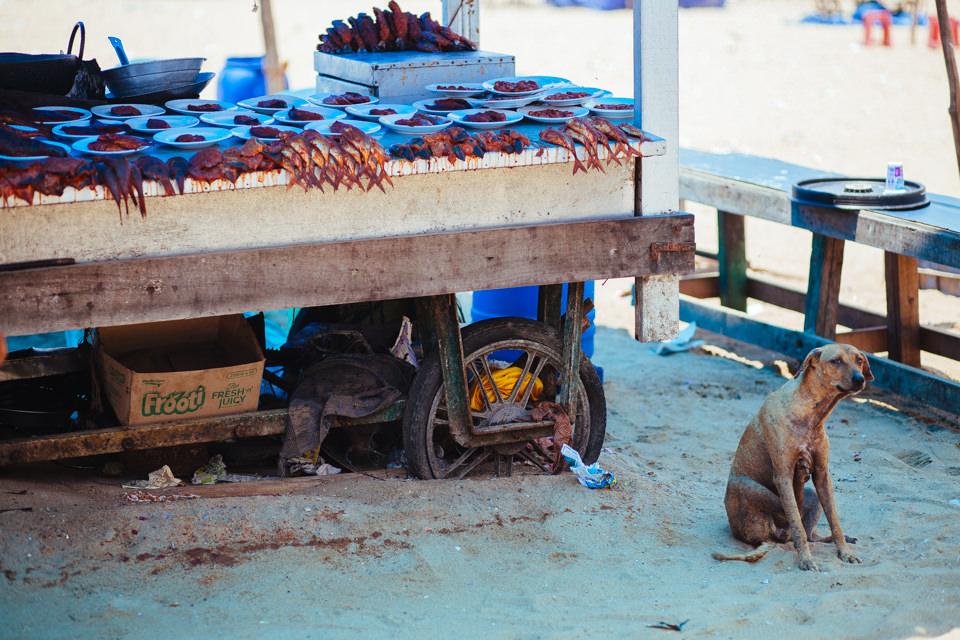 Hund neben einem Fisch Stand