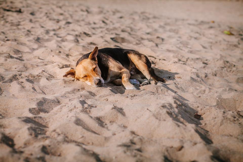 Schlafender Hund am Strand