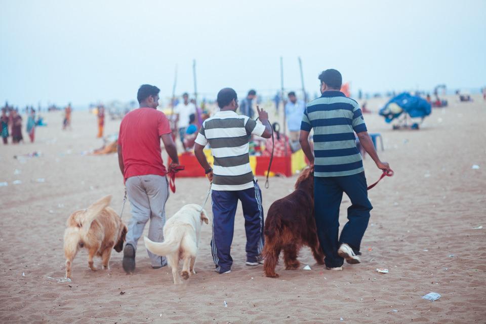 Drei Hunde und ihre Besitzer