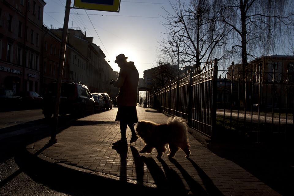 Eine Person und ein Hund auf der Straße im Gegenlicht.