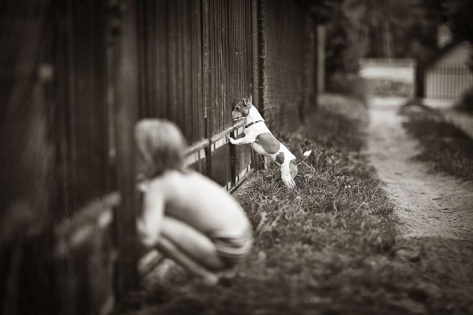 Ein Junge und ein Hund sehen gemeinsam durch einen Zaun.