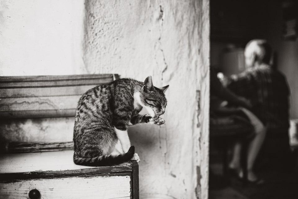 Eine Katze leckt sich die Pfote.