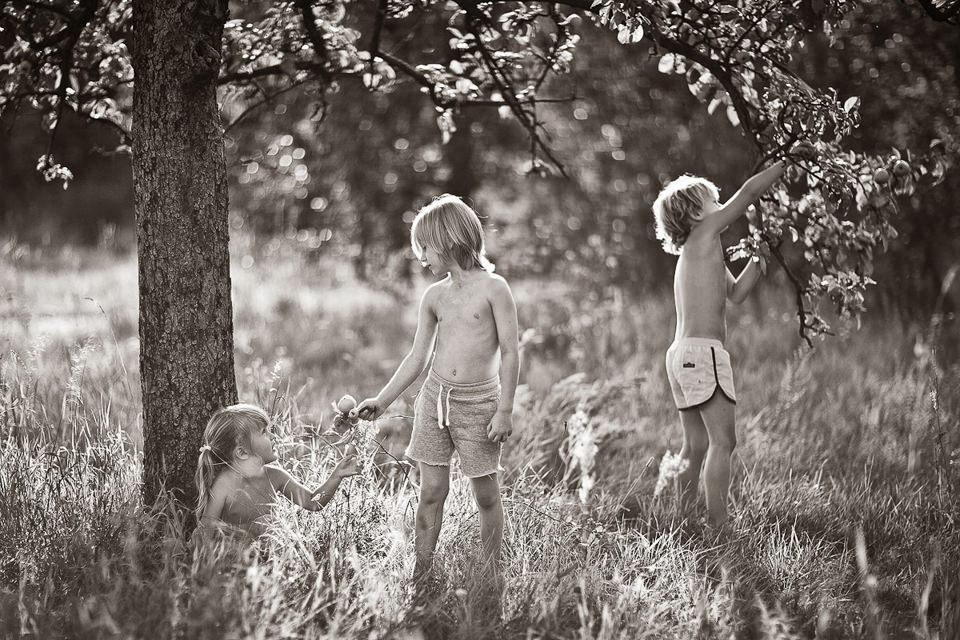Drei Kinder pflücken Äpfel.