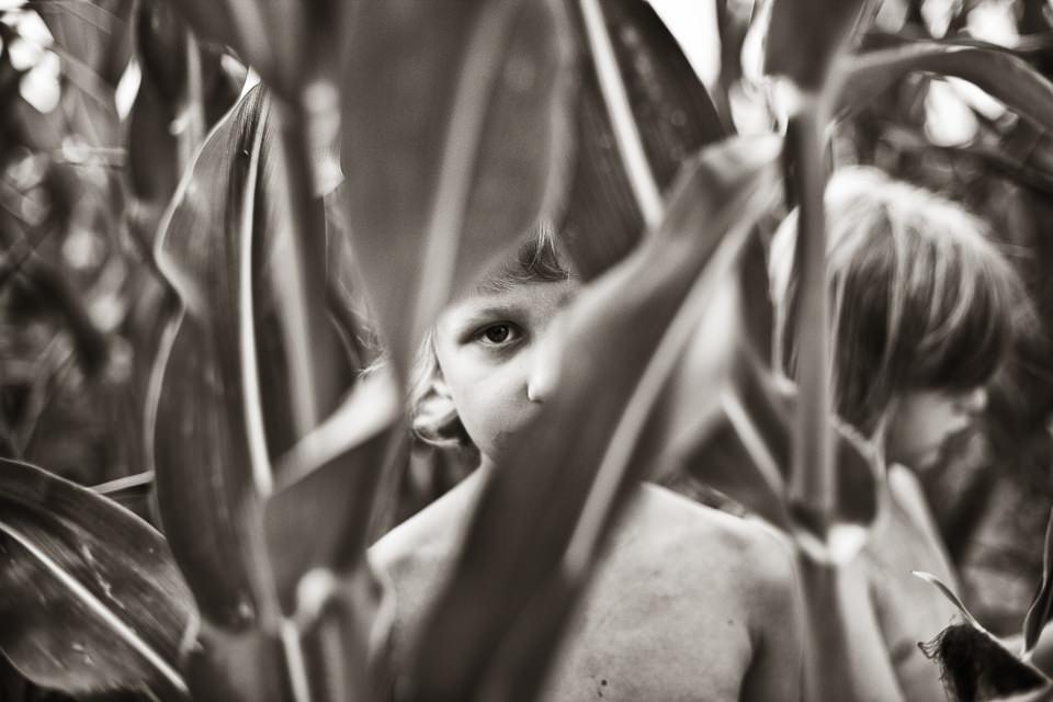 Kinderportrait im Maisfeld.
