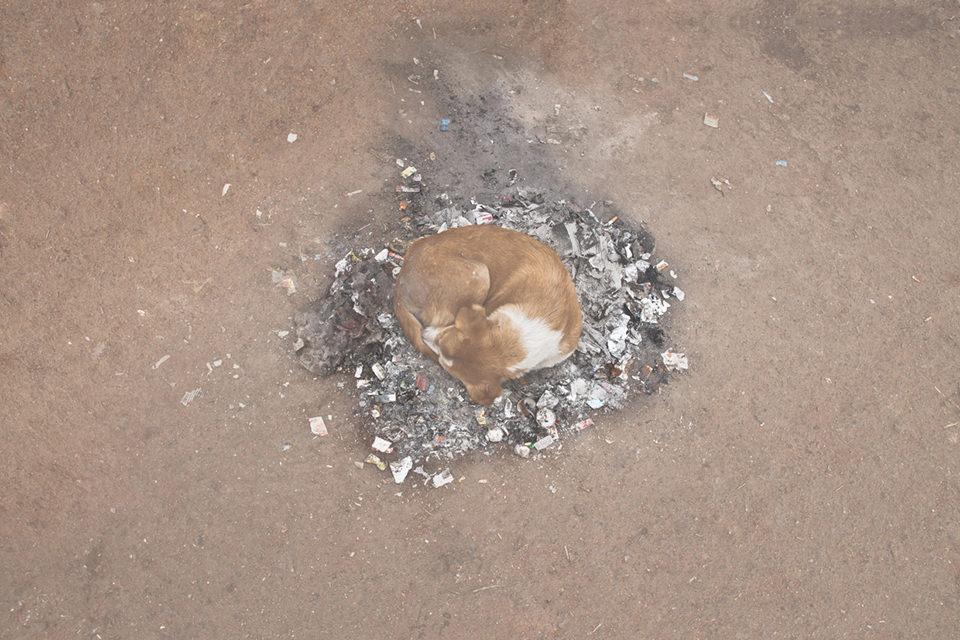 Ein Hund wärmt sich auf den Resten eines Lagerfeuers.