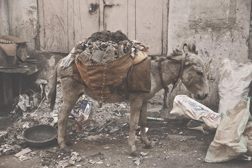 Ein schwer bepackter Esel.