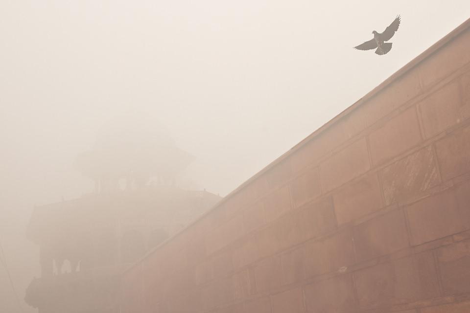 Ein Vogel fliegt über eine Mauer.