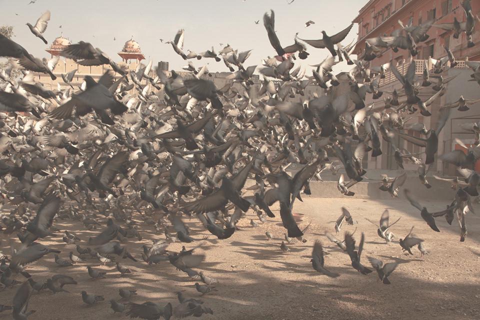 Ein Schwarm aufgescheuchter Tauben