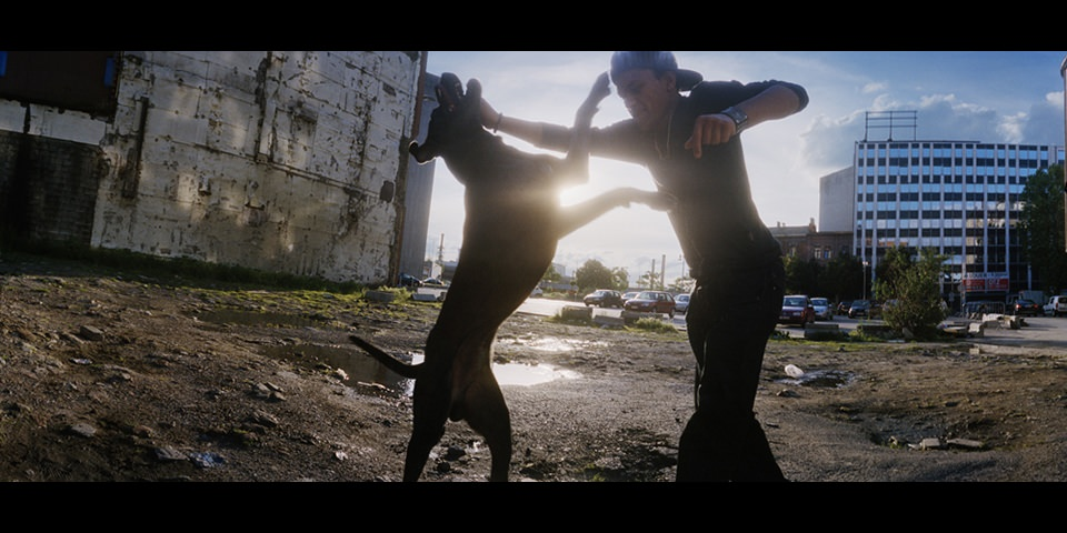 Ein Junge und ein Hund springen im Gegenlicht.