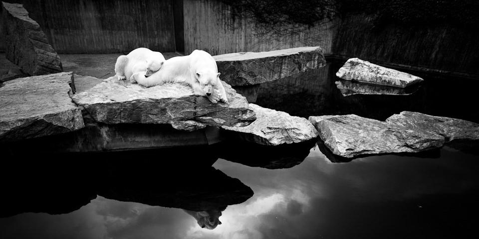 Zwei Eisbären sitzen auf einem Felsen