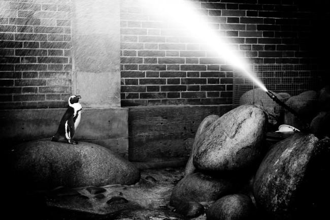 Ein Pinguin wird mit Wasser bespritzt
