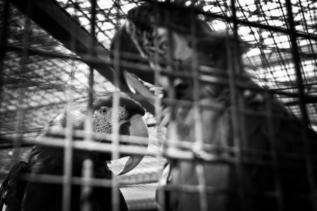 Zwei Papageien sitzen in einem Käfig
