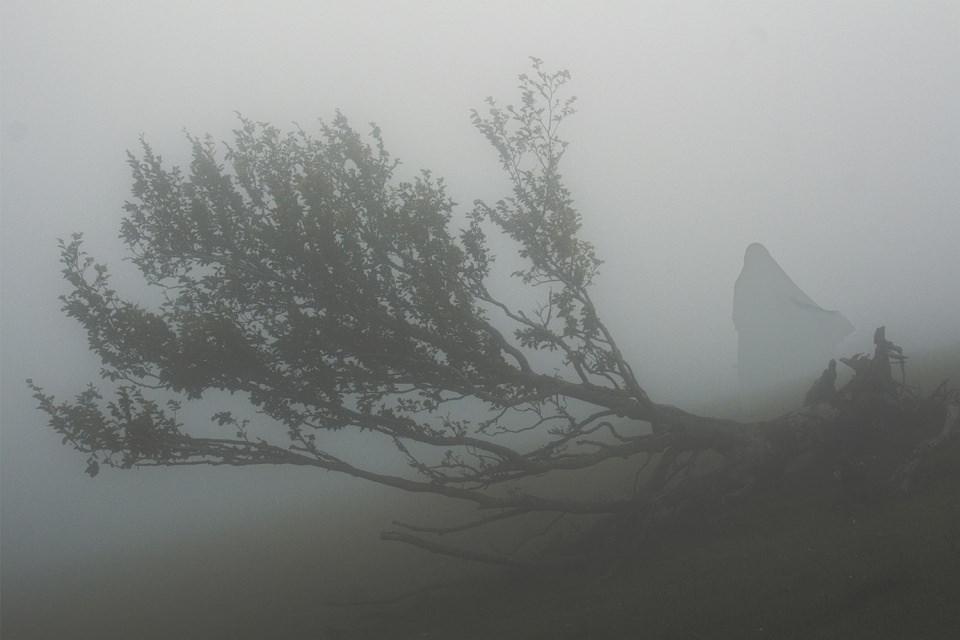 Ein großer Ast und ein gerade noch zu erahnender Mensch im Nebel.