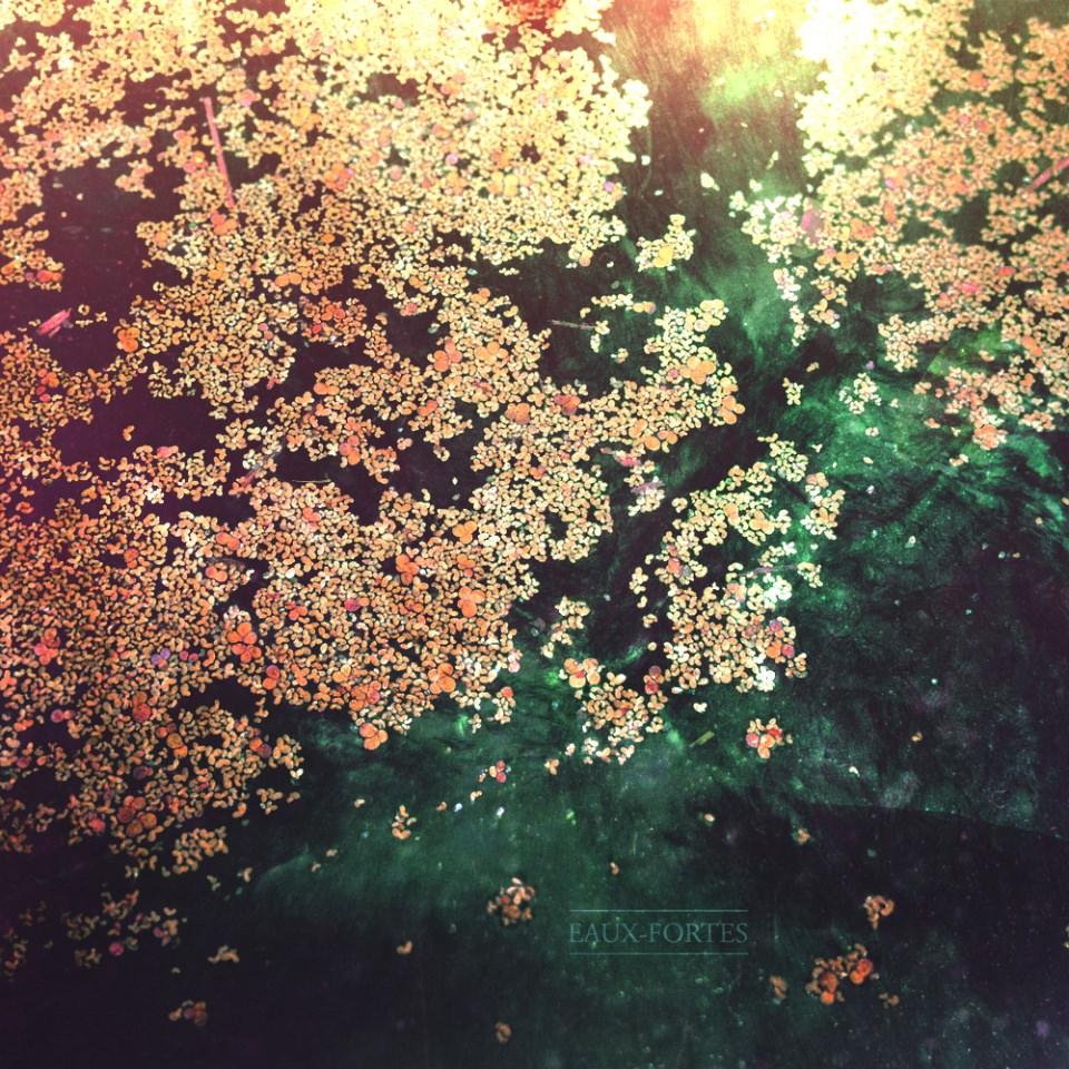 Bunte Blütenblätter auf einer Wasseroberfläche.