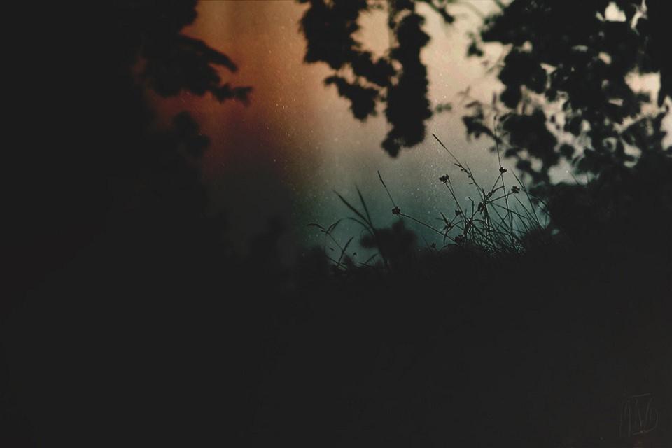 Silhoutten von Gras und einem Ast vor einem bunten Himmel.