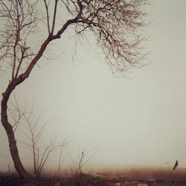 Ein Baum steht sehr sentimental in der Gegend rum.