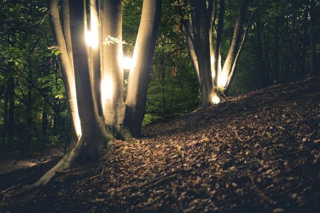 Leuchtende Kugeln zwischen Baumgabeln.