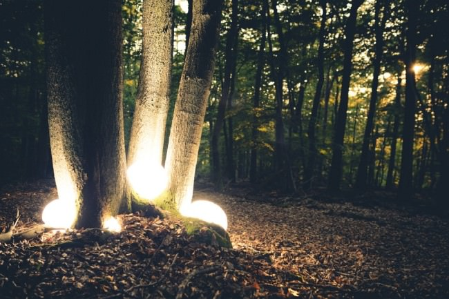 Leuchtende Kugeln in einer Baumgabel.