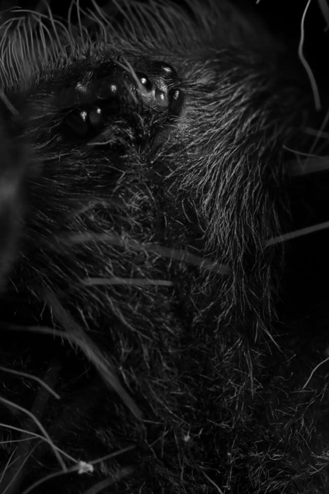 Spinnenaugen