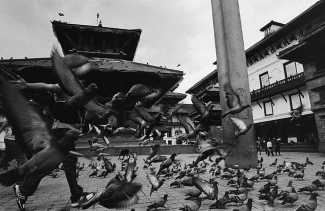 Auffliegende Tauben auf einem Platz.