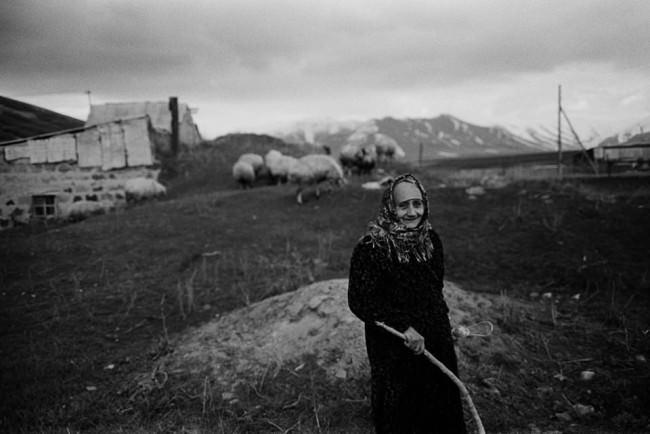 Eine ältere Frau steht auf einem Feld, hinter ihr Schafe.