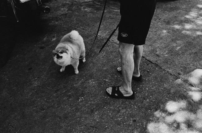 Ein Hund, der komisch schaut und die Beine seines Besitzers.
