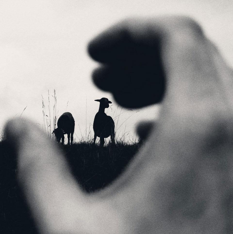 Eine unscharfe Hand im Vordergrund legt sich um die Silhouetten zweier Schafe