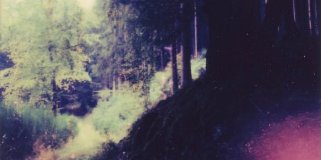 Blick an einem Waldrand entlang.