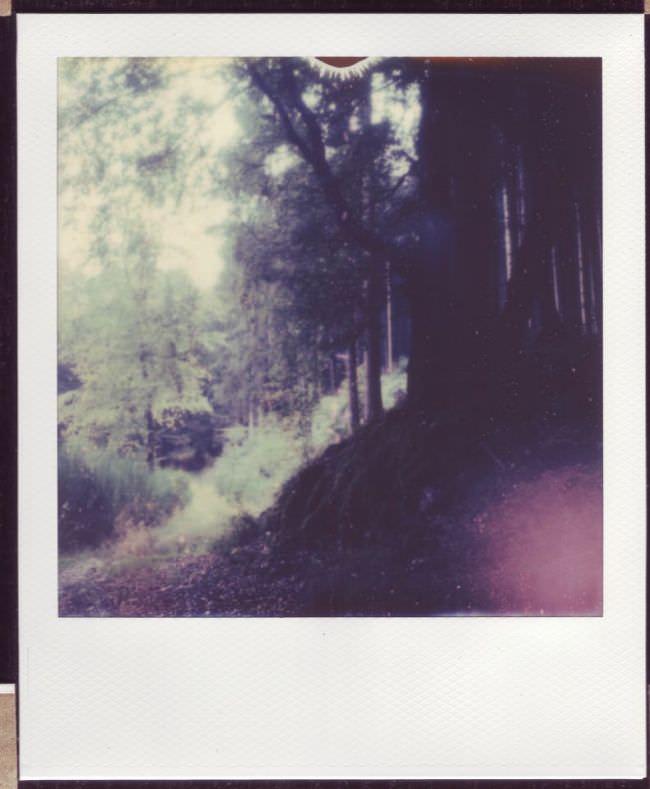 Gescanntes, unbearbeitetes Polaroid.