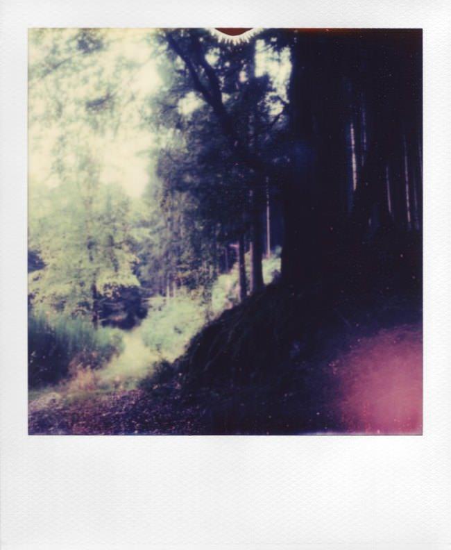 Polaroid: Blick an einem Waldrand entlang.