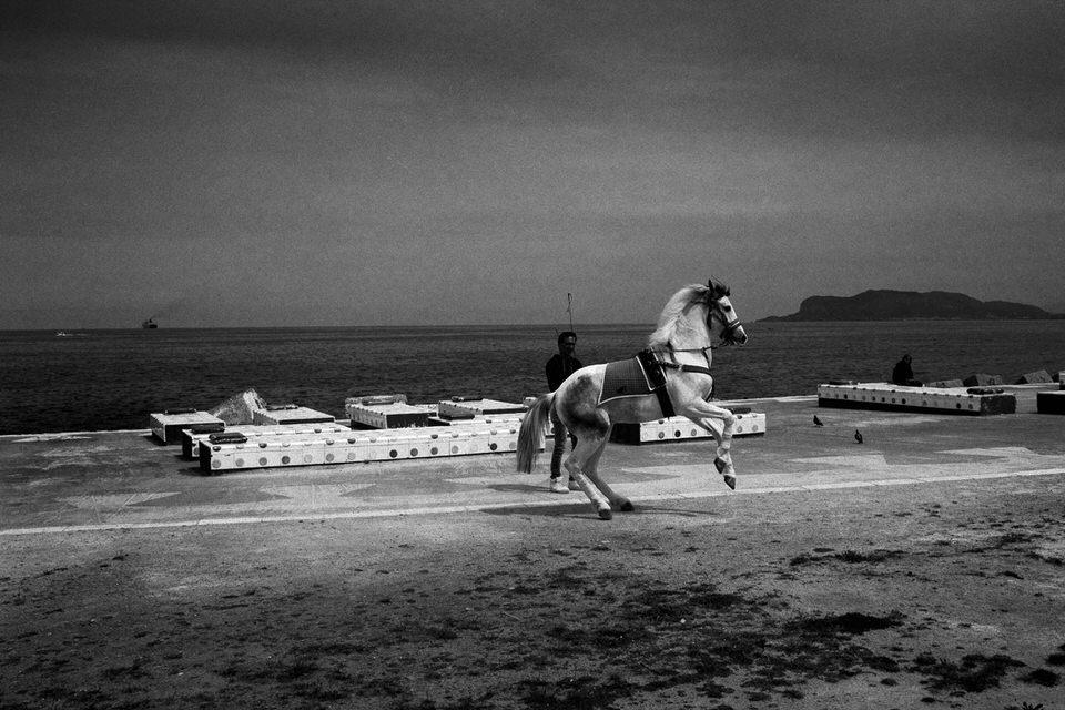 Ein Pferd wird dressiert. Im Hintergrund das Meer.