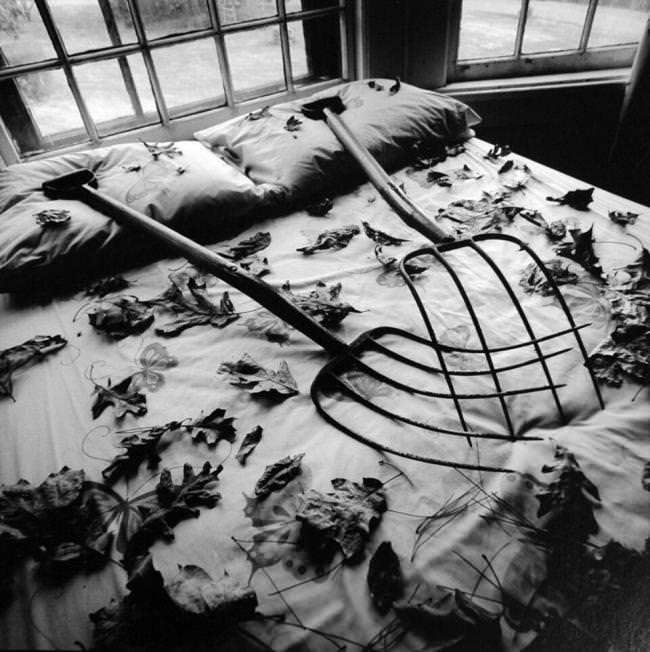 Mistgabeln liegen auf einem Bett mit Blättern.