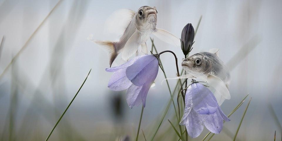 Zwei Fische, die um Blüten auf einer Wiese fliegen.