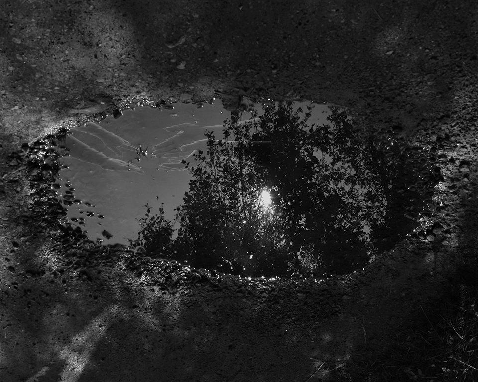 Reflexionen von Baumkronen in einer Pfütze.