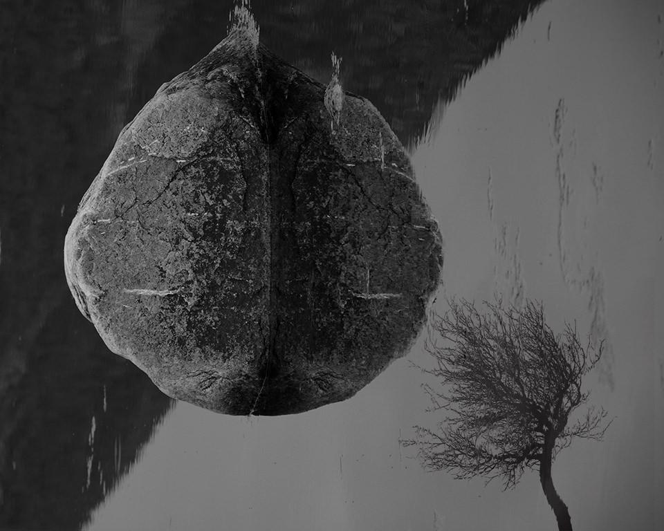 Reflexion eines Steins und eines kahlen Baumes im Wasser.