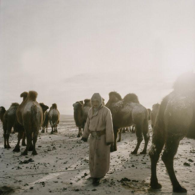 Ein Kameltreiber steht zwischen seinen Tieren.