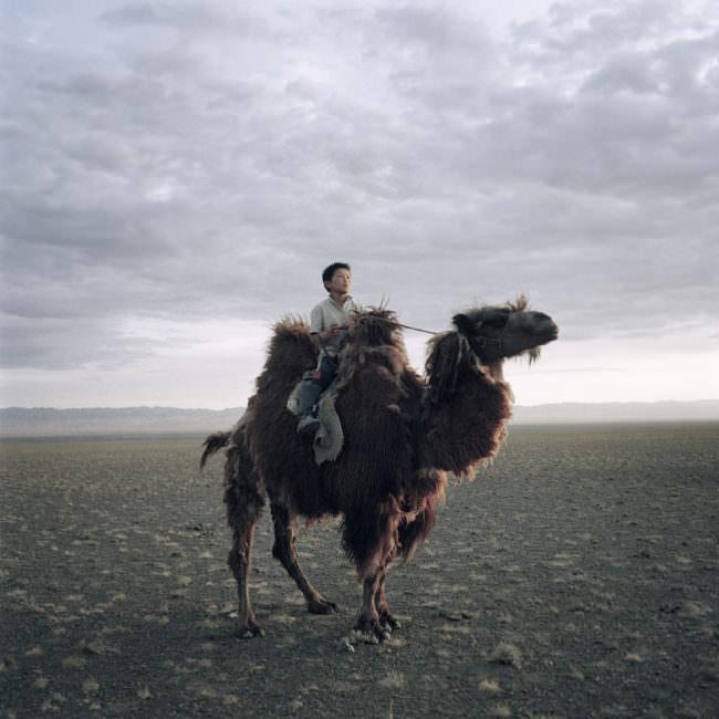Ein mongolische Junge sitzt auf dem Rücken eines Kamels und schaut in die Weite der Steppe.